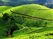 Must Places Kerala, God's Country
