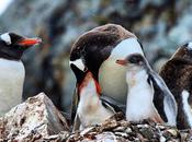 Instagrams Antarctica