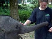 Volunteer Malaysia: Kuala Gandah Elephant Sanctuary