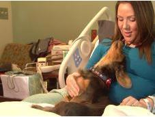 'Dog Days' Ease Anxiety Hospitalized Pregnant Women