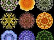 2013 Flower Mandala Calendar Water Lily