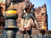 Lopburi Thailand: Exploring Monkey Town
