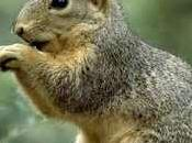 Accidental Shooting Texas 12-Year-old While Hunting Squirrels