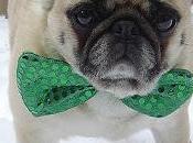 Photos: Patrick's Dogs