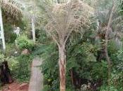 Plant Week: Ceroxylon Quindiuense