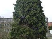 Tree-Cat