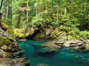 Treasure Hunt River