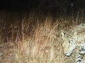 Q&A with Jaguar Advocate Critical Habitat Opponent Alan Rabinowitz