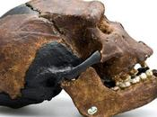 Neanderthal with Chin: Human Hybrid?