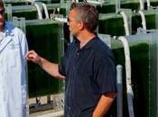 Technology Suite Prevent Biofuel Pond Crash Problem