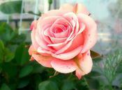 Wonder Wednesday: Pink Scents Summer