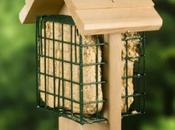 Create Your Backyard Symphony With Bird Feeders