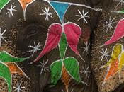 Elephant Count Lanka Cause Concern?