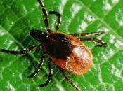 Lyme Disease Most Misdiagnosed America