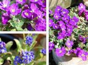 Money-saving Garden Tips