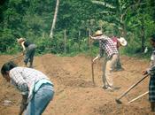 Alba's Farm: Progressio Honduras