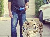 Attack: BoKhalid Cheetah