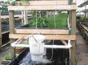 Aquaponics Rise Food Urban Production