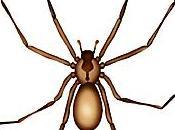 Synthetic Spider Venom Better