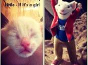 Naming Kittens- Easy!