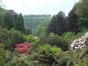Postcard from Cornwall Trebah