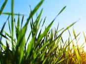 Five Benefits Green Funeral