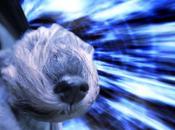 DOGS Travel Through Space Warp Speed!