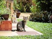 Photoset: Cats!