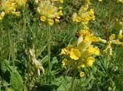 Plant Week: Primula Veris