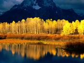 Quaking Aspen Population Trouble