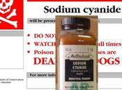 Email from Sodium Cyanide Supplier