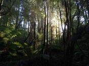 Tree Tasmanian Growth
