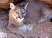 Keepers Wild Animal Rescue Sanctuary, Kingman, Arizona,