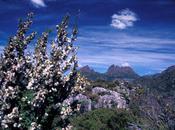 Tasmania, Part Cradle Mountain