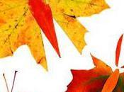 Fall Leaf Butterflies