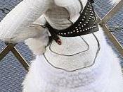 Vanity Fair Lady Gaga Dressed Impress Her...