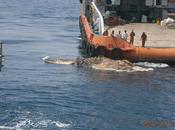 Large, Strange Creature Found Persian Gulf What (Video Photos)