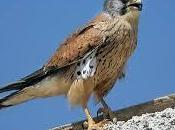 Bird Cleared Spying Israel Turkey