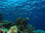 Marine Life Threat from Warming Oceans