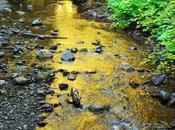 Shimmering Gold Olympic National Forest, Washington