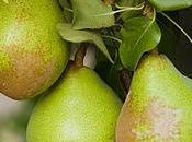 Grow Pear Ke$ha Jonathan's Fine Jewelers