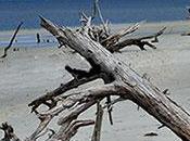 Where Driftwood