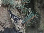 Black-and-white Warbler Visits Headed South