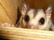 Cuteness Alert: Three Queensland Animals That Will Make Smile