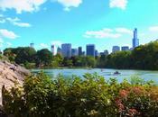 Half Central Park