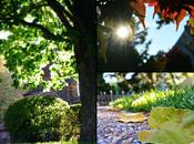 Greens Autumn {Nurture Photography}