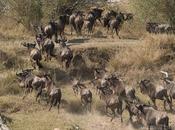 Safari Masai Mara Triangle