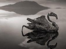 Tanzanian Lake Turns Birds into Calcified Statues