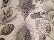 Ernst Haeckel Plant Forms Nature