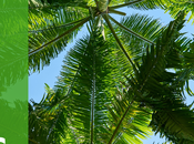 Palm Tree Care Feeding